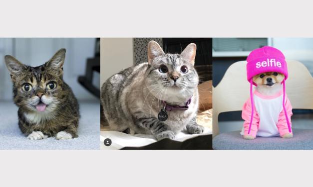 Máte doma zvieratko? Zriaďte mu instagramový profil!