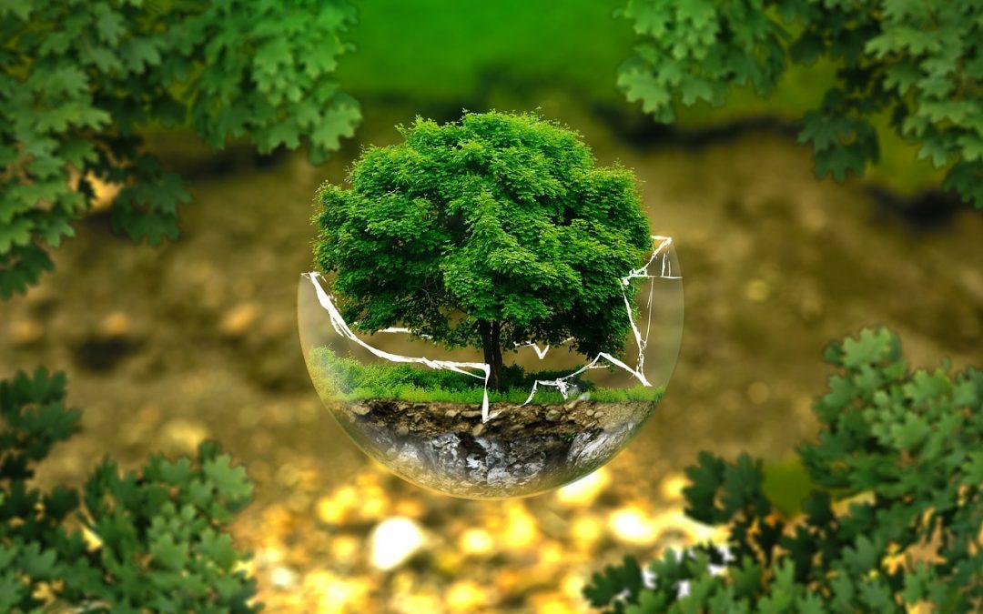 Green marketing vs. greenwashing